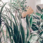 Full of plants